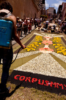 Flower carpets017