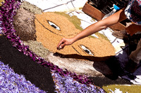 Flower carpets015