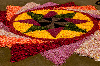 Flower carpets009
