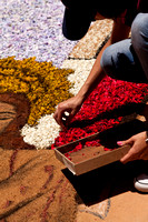 Flower carpets011
