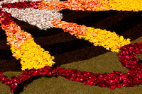 Flower carpets014
