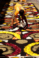 Flower carpets001