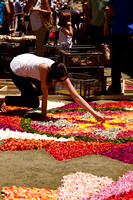 Flower carpets008